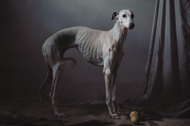 'Where Hunting Dogs Rest' © Martin Usborne