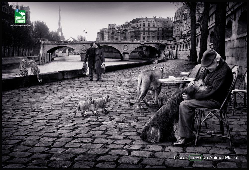 A New York based creative sent a trusted NZ Photographer Mat Blamires was sent to Paris by a trusted